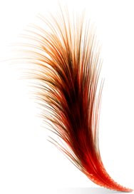Deb's Feather Art image